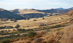"Scattered ""whale rocks"" are sprawled across the long meadow from Salisbury Potrero to the Pine Corral."
