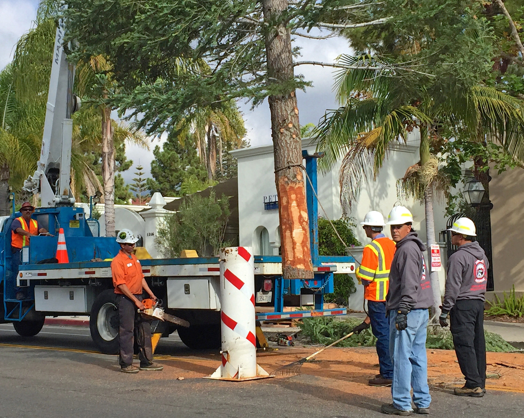 State Street Christmas Tree Installed Ahead of Santa Barbara's ...