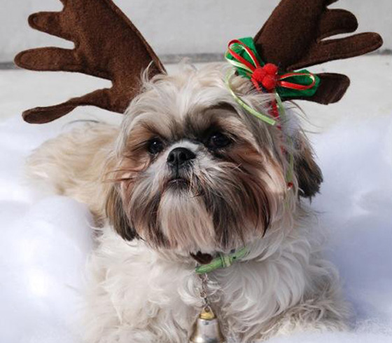 Pets can hop on Santa's lap and pose for priceless holiday photos Dec. 8-9 at the Canary Hotel.
