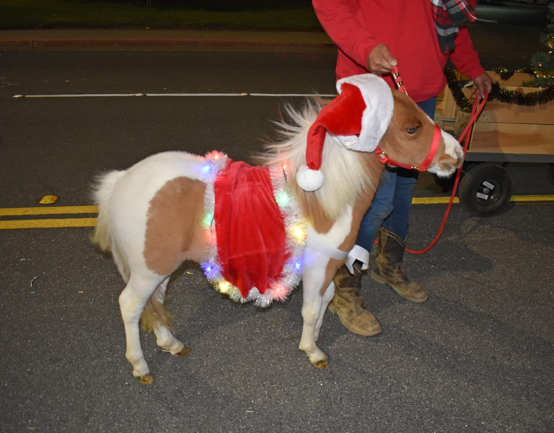 A miniature horse sports a Santa hat and other Christmas decor for the Village Vet entry in the Lompoc Valley Children's Christmas Season Parade.