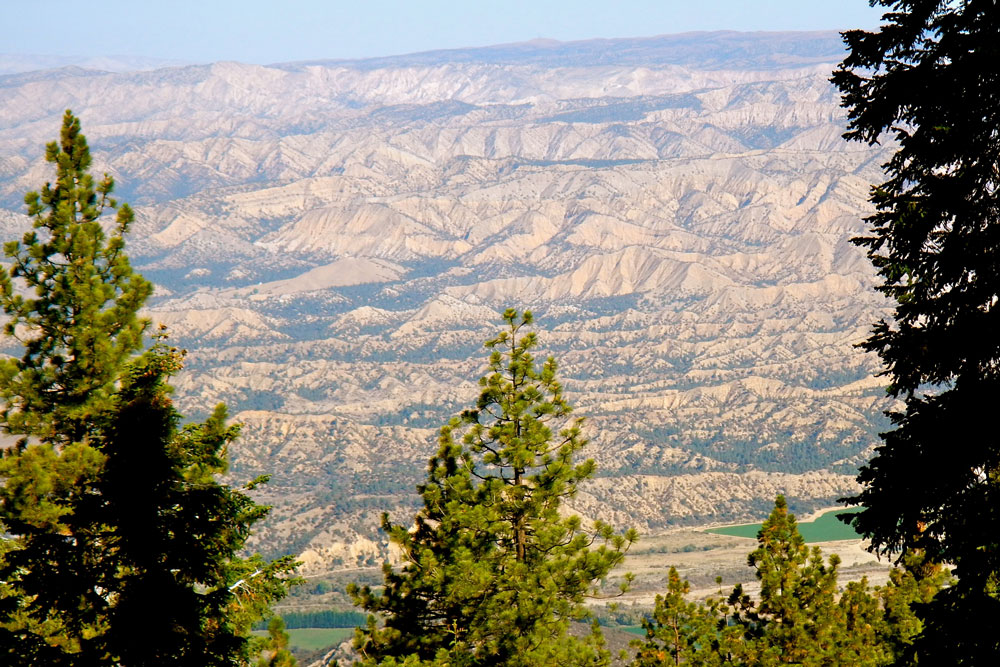 The Cuyama badlands are seen behind a curtain of conifirs.