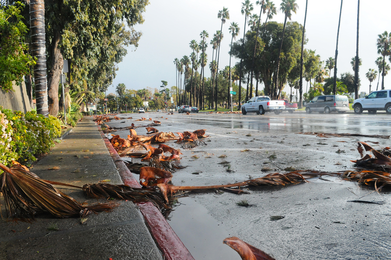 Palm fronds litter Cabrillo Blvd. on Friday after the heavy rains.