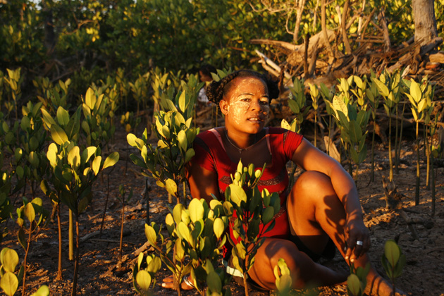 <p>Eden Reforestation Project eco-employee sits in the middle of 6-month-old mangrove estuary reforestation seedlings.</p>