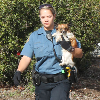 A Santa Barbara Animal Control officer carries a dog from the scene of a Cadillac Escalade crash Saturday. Two people suffered serious injuries in the crash, and a second dog reportedly was killed. (Urban Hikers photo)