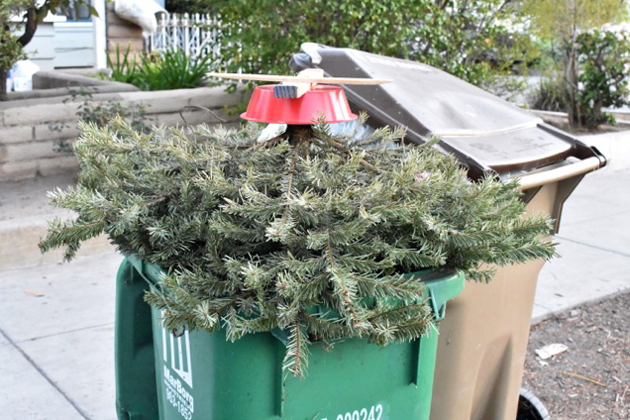 How to Get Rid of Your Christmas Tree This Week in Santa Barbara ...
