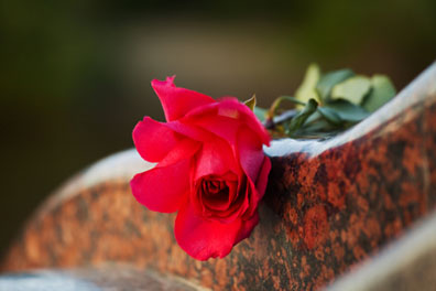 Closeup of a partially open red rose atop a piece of marble