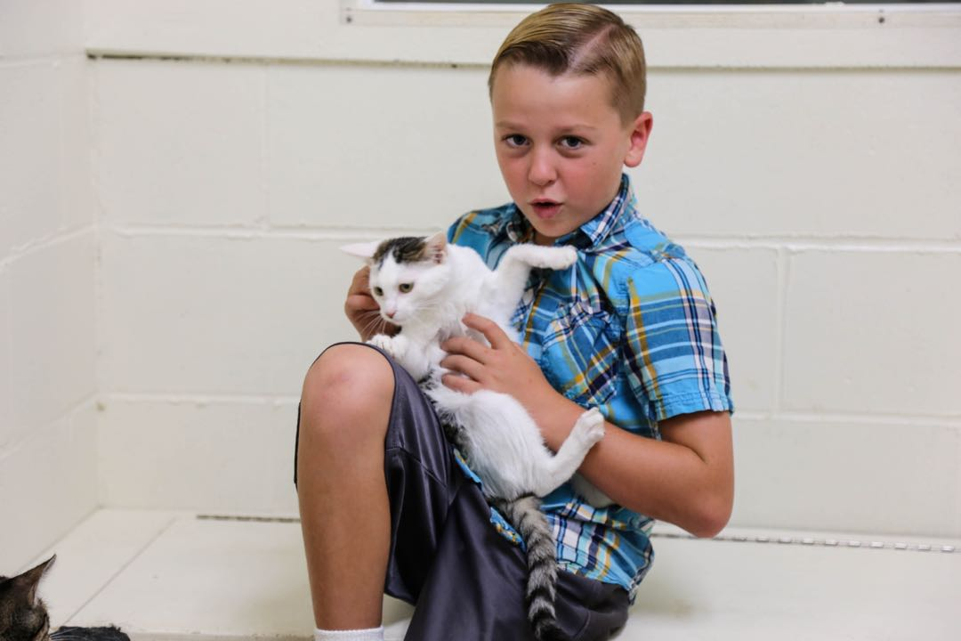 Playing with kittens is an important part of their development as the Santa Ynez Valley Humane Society gets them ready for adoption. It's also fun for the volunteers, who come in all ages and sizes.