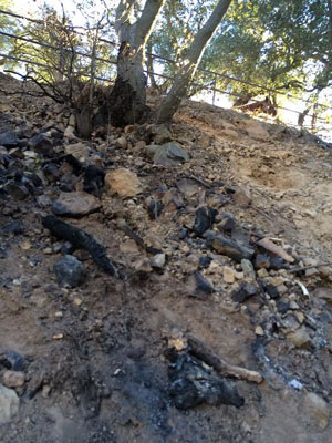 Charred vegetation remains from a half-acre brush fire that burned near a Toro Canyon horse corral. (Grienitz family photo)