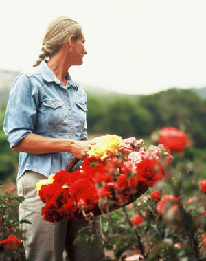 Dani Hahn is outstanding in her field. The Rose Story Farm owner was recently bestowed with one of the most prestigious honors a rosarian can achieve: 2014's Great Rosarian of the World. (Rose Story Farm photo)