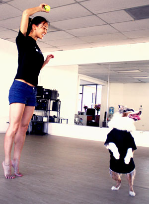 While Vicki Wang's dance partner, Murphy, has been known to dog it on occasion, she did teach him to stand and spin on his hind legs.