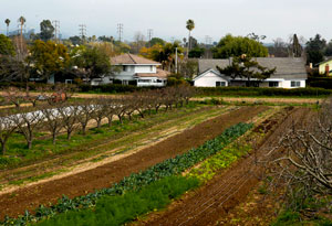The 12½-acre Fairview Gardens is protected from development by the Land Trust of Santa Barbara County.