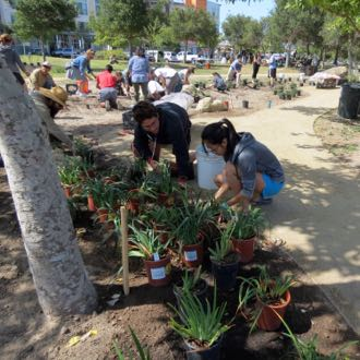 UCSB student Jessie Ong, right, learns how to plant irises Saturday at the People's Park planting day, with guidance from UCSB alum Dillon Polito. (Gina Potthoff / Noozhawk photo)