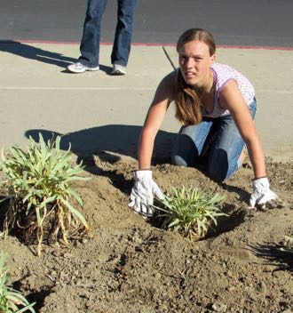 Madelyn Schock, 12, puts plants in the ground in front of the Lompoc Corporation Yard as part of Make A Difference Day. (Janene Scully / Noozhawk photo)