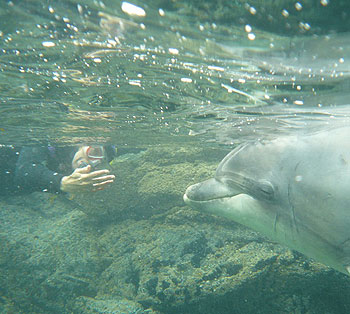 Toni Frohoff coaxes a free-ranging dolphin in Ireland into a research experiment she conducted with fellow dolphin expert Ute Margreff.