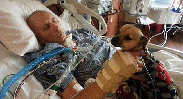 Anthony Pearson, a 68-year-old Marine veteran, was recently visited in the hospital by his service dog, Pepper, who helps with his hearing issues. Santa Barbara County Animal Control Officer Geoff Clinton arranged the visit for Pearson, who remains in critical condition after he was struck by a hit-and-run driver while riding his bike in Santa Maria last month. (Geoff Clinton photo)