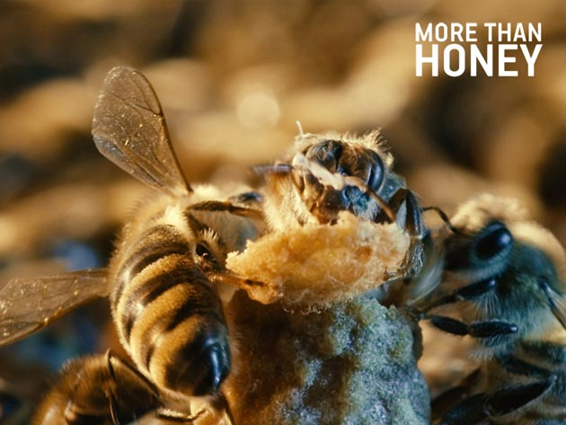The award-winning documentary, 'More Than Honey,' will be shown May 31 at the Riviera Theatre, with a Q&A with the director to follow. (More Than Honey photo)