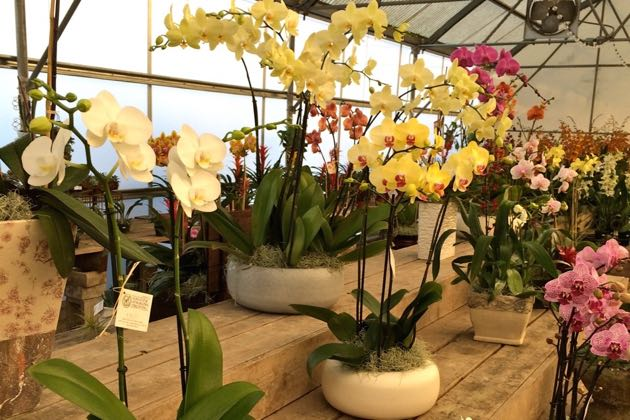 Need some inspiration and advice on how to grow and utilize orchids, just visit one of the plentiful orchid greenhouses on the Central Coast.