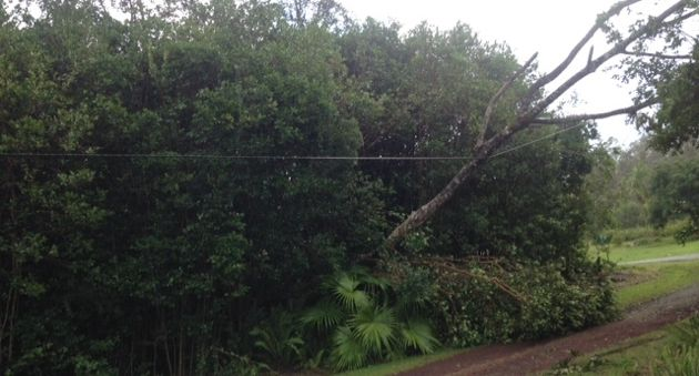 The power line on my road after Tropical Storm Iselle. (Tam Hunt photo)