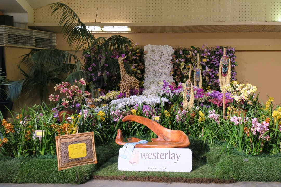 The display by Westerlay Orchids of Carpinteria was awarded a Special Recognition for Design.