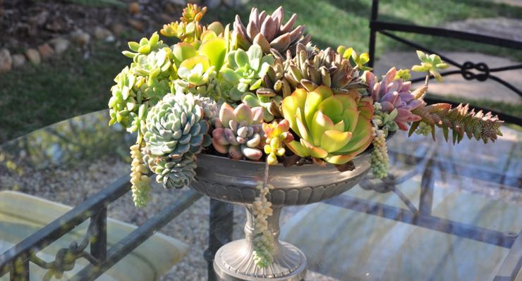 The textures and colors of succulents make them a visually interesting — and appealing — arrangement, inside and outside your home.