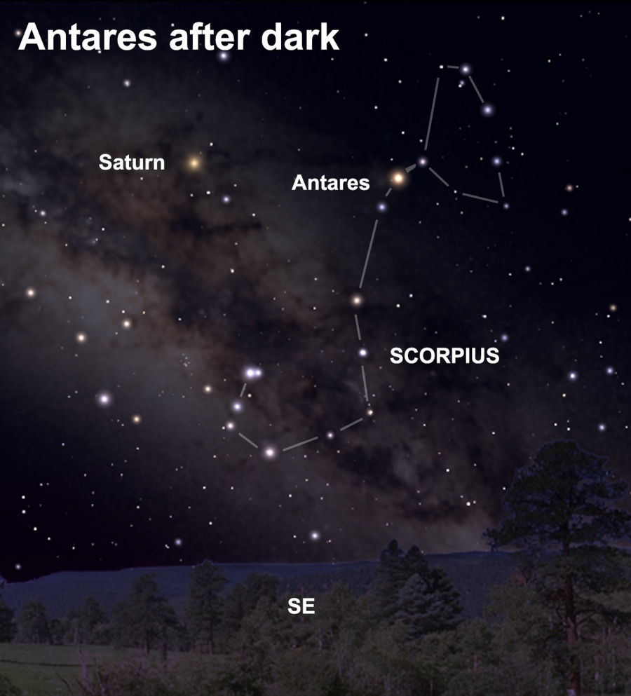 View the star Antares after dark this week.