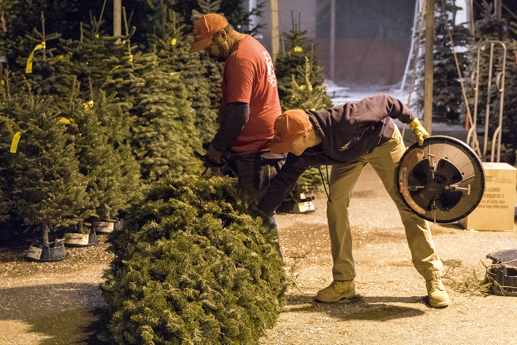 For Tree Sales, Thomas Fire Is the Grinch Who Stole Christmas ...