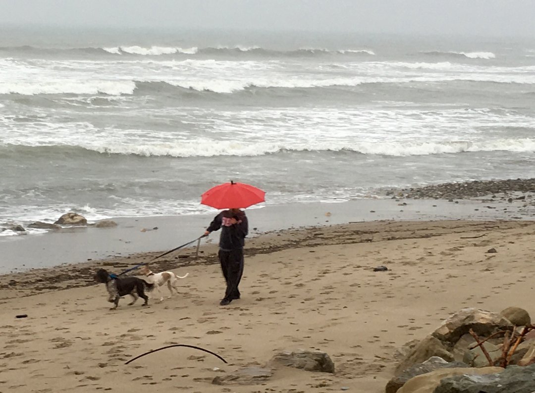 The rain couldn't deter all beach walkers on Arroyo Burro Beach Sunday.