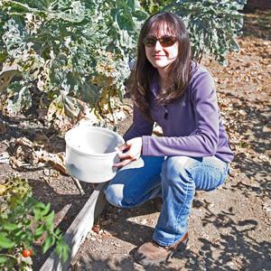 Maria Murrietta, a UC Cooperative Extension agricultural technician, collected Bagrada bugs from a Goleta backyard so they can be studied. (Joan Bolton / Noozhawk photo)