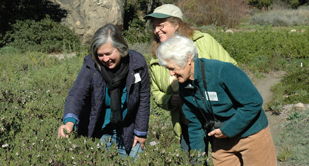 <p>From left, Judy Sanregret, director of education at the Santa Barbara Botanic Garden, and garden docents and California Naturalist Program graduates Susan Davidson and Cathy Rose look at the newly blossomed manzanitas at the garden.</p>