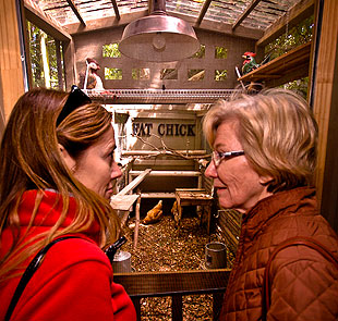 Fowl-weather friends Janet Loughlin, left, and Adrienne Girod talk poultry during the Loop de Coop tour.