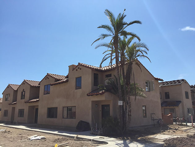 Decades-old palms in new home before Casas de las Flores affordable housing.