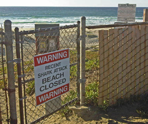 At sign at Ocean Beach park west of Lompoc on Tuesday warns that Surf Beach is closed due to a fatal shark attack. Authorities say the beach could reopen as soon as Wednesday. (Michael Brewer photo)