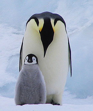What would a penguin gain by being made human, as in Anatole France's