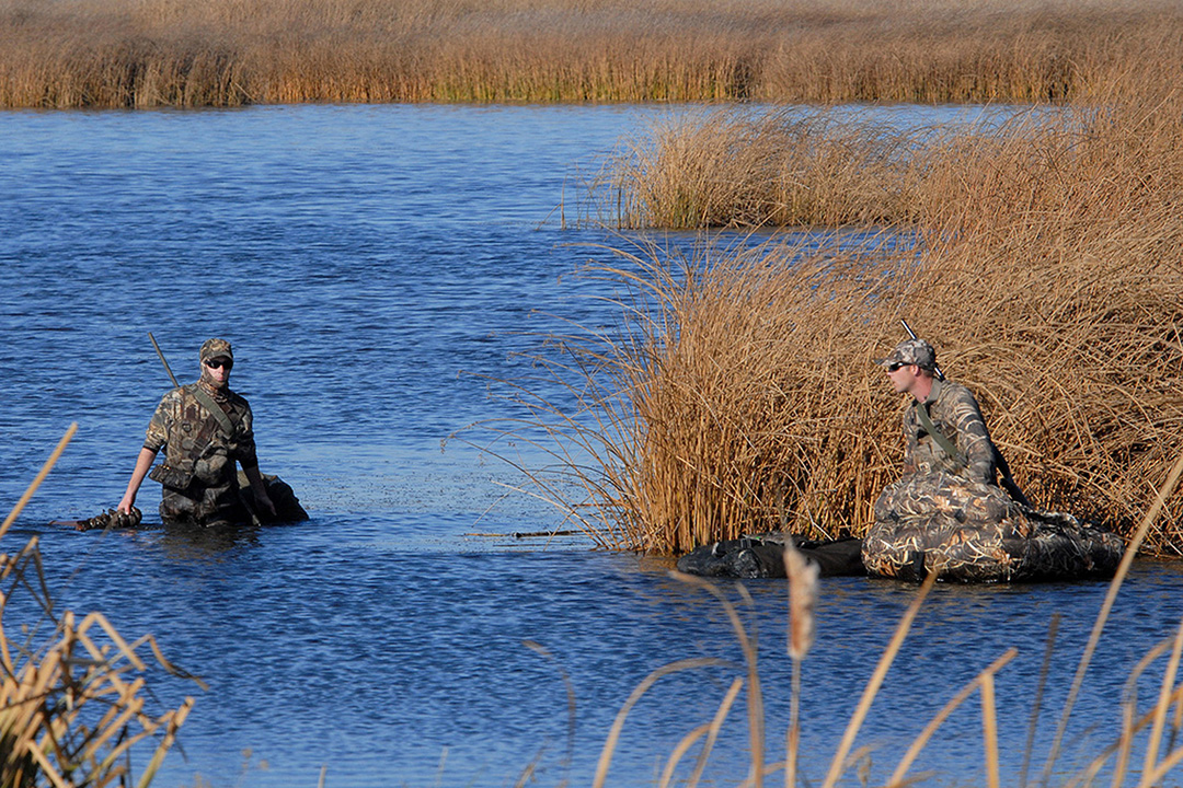 Ethical hunters will make every attempt to find a downed bird and count it to their bag whether they find it or not.