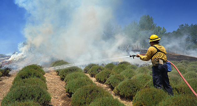A firefighter douses a vegetation fire that broke out Tuesday on Brinkerhoff Avenue in Los Olivos. (Mike Eliason / Santa Barbara County Fire Department photo)