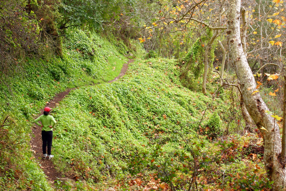 Hiker enjoys the lush vegetation in the Buena Vista narrows.