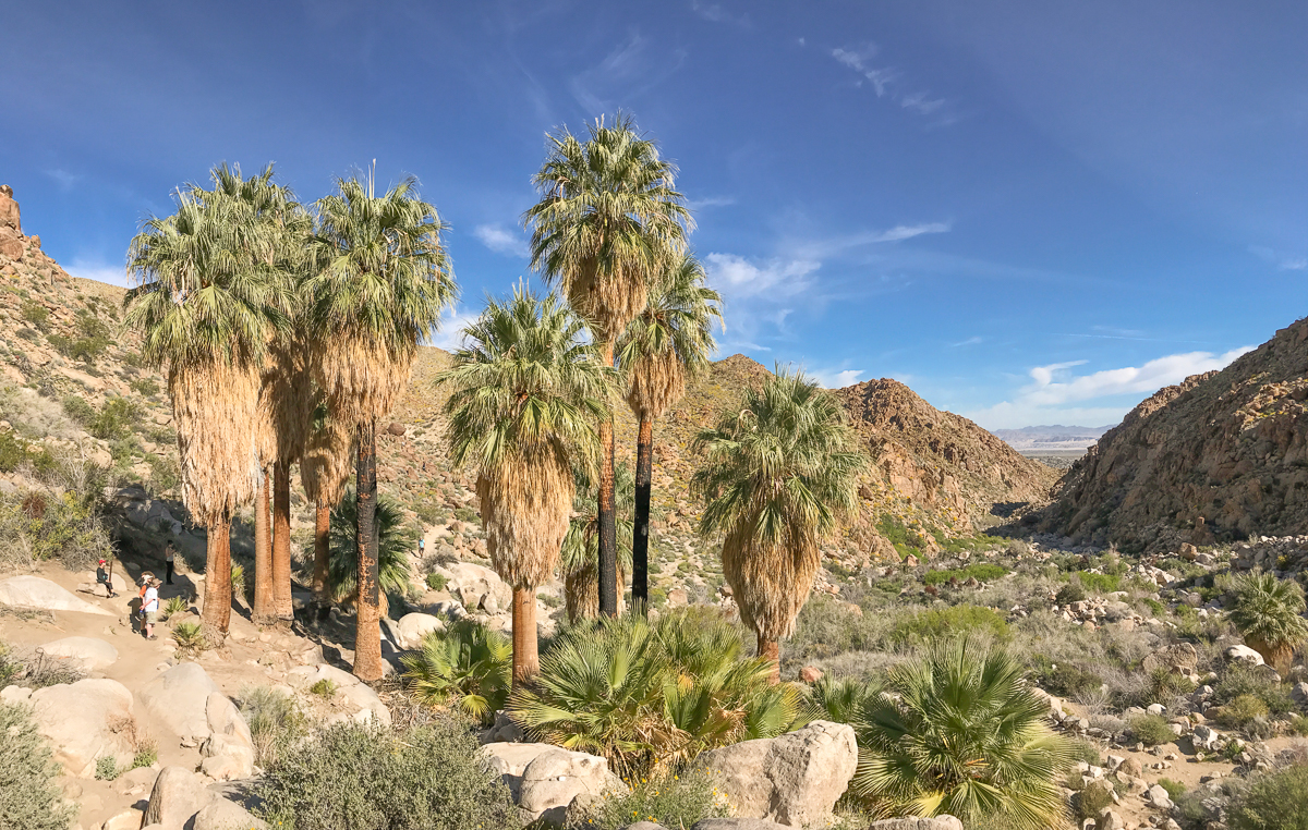 The oasis at 49 Palms is outside the main part of the park, but one of the best short hikes out and back close to Twentynine Palms.