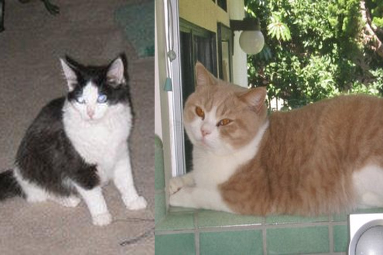 Lila and Murphy - Missing Pets