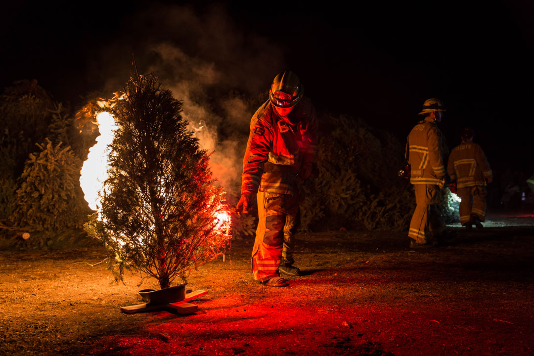 Firefighters set fire to Christmas trees Friday night t Mission Santa Ines in Solvang.