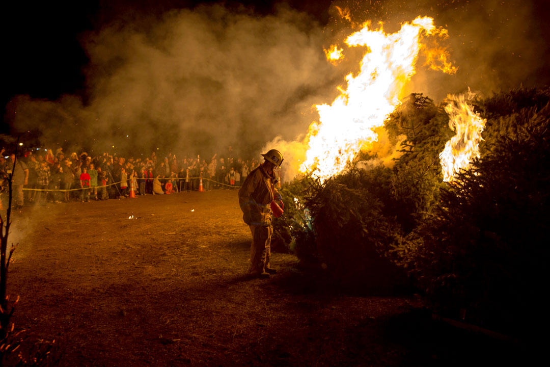 A firefighter sets fire to Christmas trees Friday night t Mission Santa Ines in Solvang.