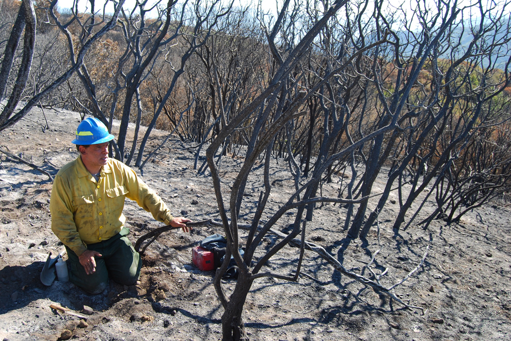 Eric Nicita, US Forest Service soil scientist, tests a soil sample in the Whitier Fire burn area Friday morning.