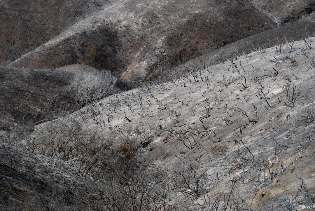 The Whittier Fire burned the upper reaches of Tecolote Canyon, northwest of Goleta.