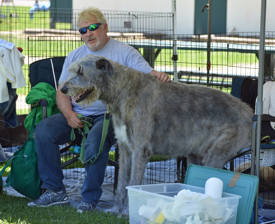 George Weisz of Scottsdale, Arizona and Irish wolfhound Maccabee sit on chairs under the shade of canopy at Lompoc's Ryon Park on Thursday.