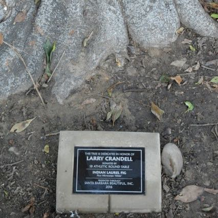 A plaque describes the Larry Crandell tree as an Indian Laurel Fig, or a ficus.