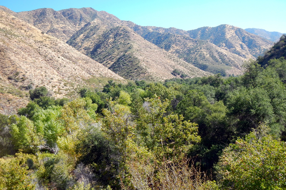 Hillsides and riparian trees in the Sisquoc corridor.