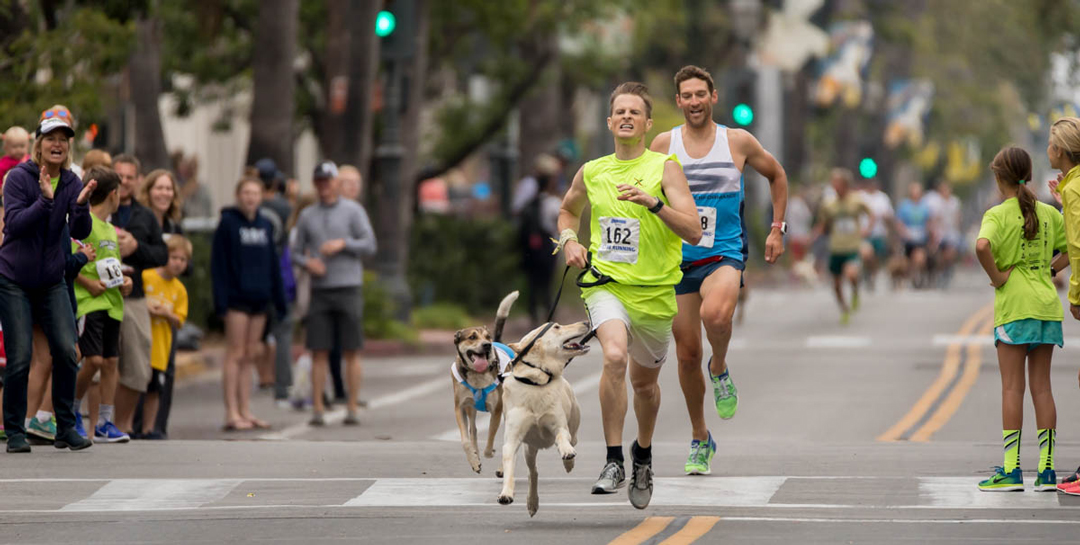 Geoffrey Gray and his dog, Hank Martukas, won the dog mile during the 2017 State Street Mile race in Santa Barbara. All proceeds from the races — for competitive athletes and just for fun — go to the Santa Barbara ounty Crime Victim Emergency Fund.