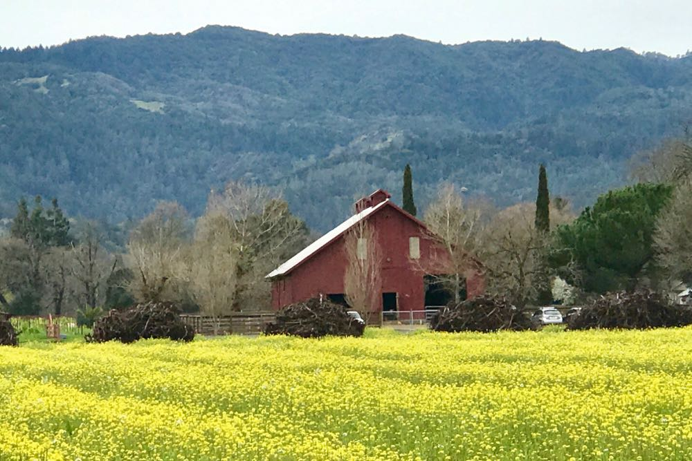 Surreal beauty is one of the reasons that Napa Valley has more annual visitors than Disneyland.