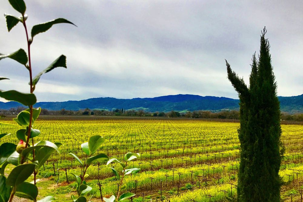The Napa Valley countryside and vineyards are spectacular.